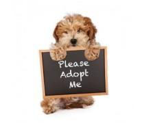 Elixir Adoption